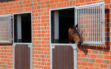Paardenboxen met vrije uitloop